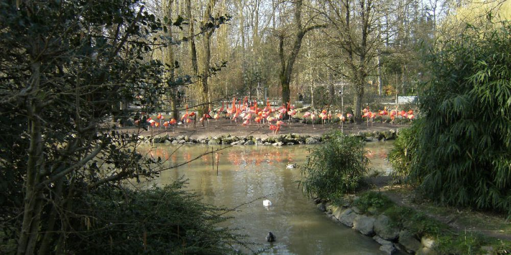 Sortie Zoo de Beauval